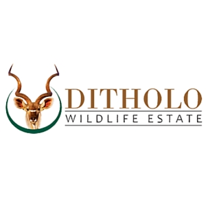 Ditholo_Logo