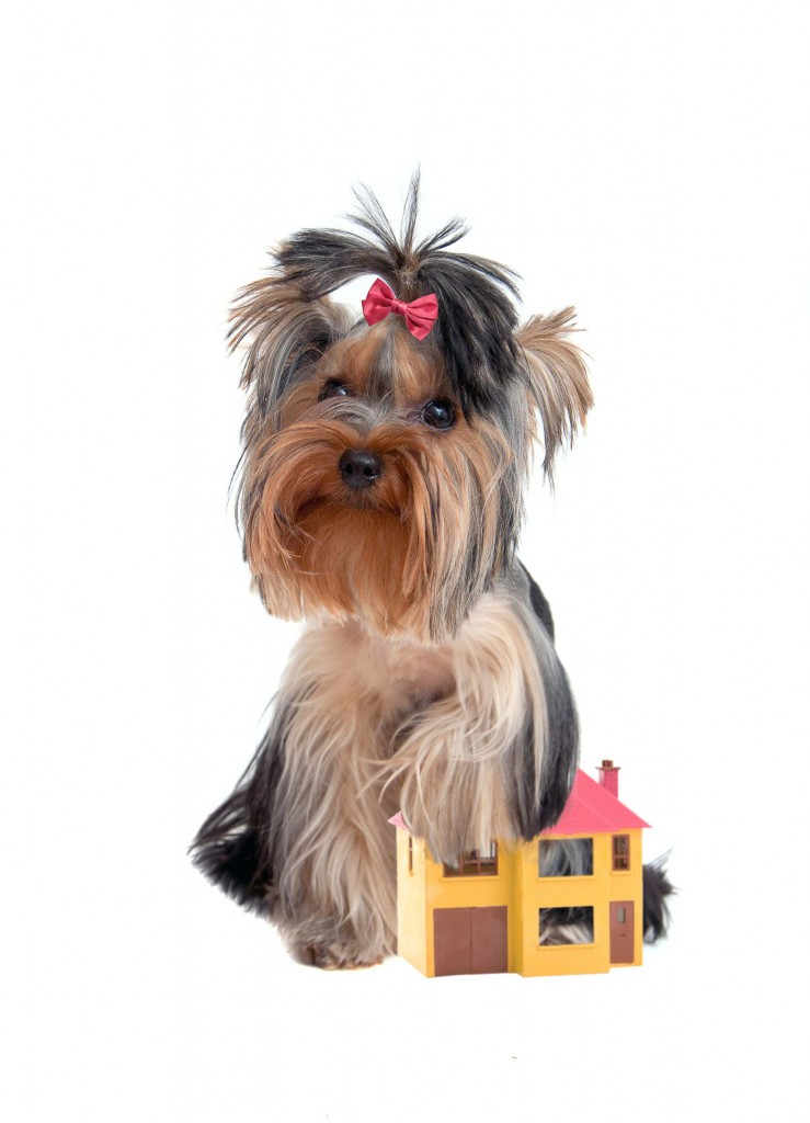 Pet-friendly developments_2