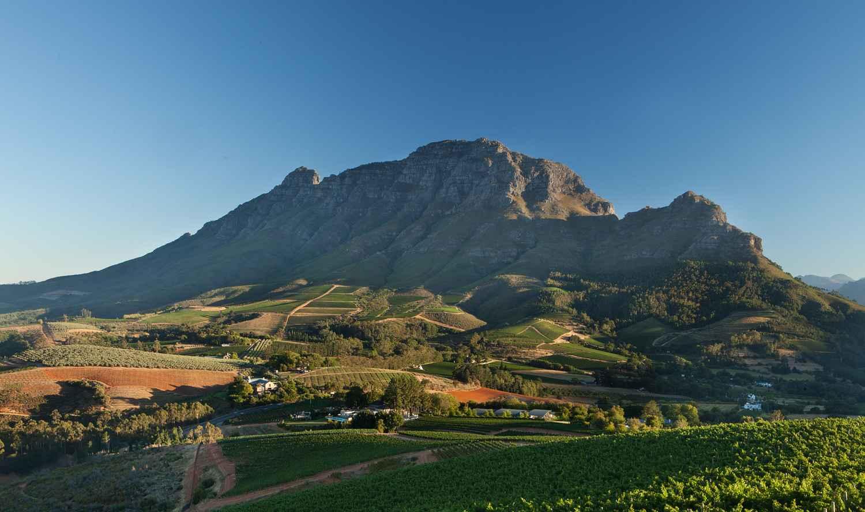 Cape Town Brandy_1