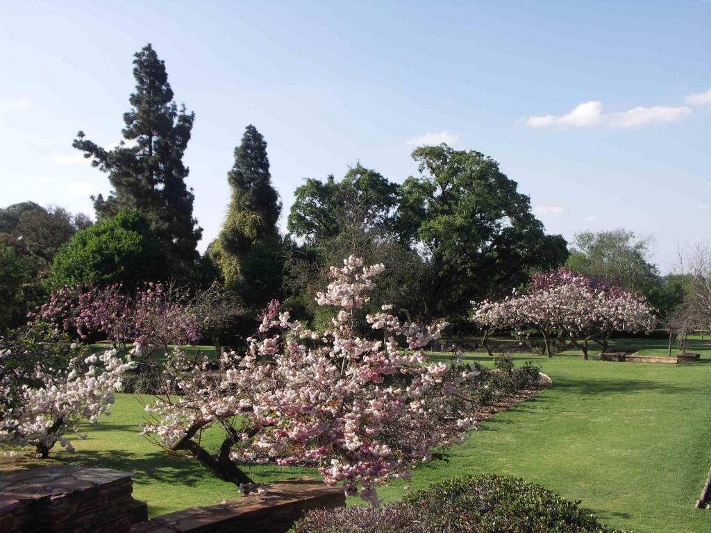 South-Africa_Johannesburg_Botanical_Garden-005-compressed