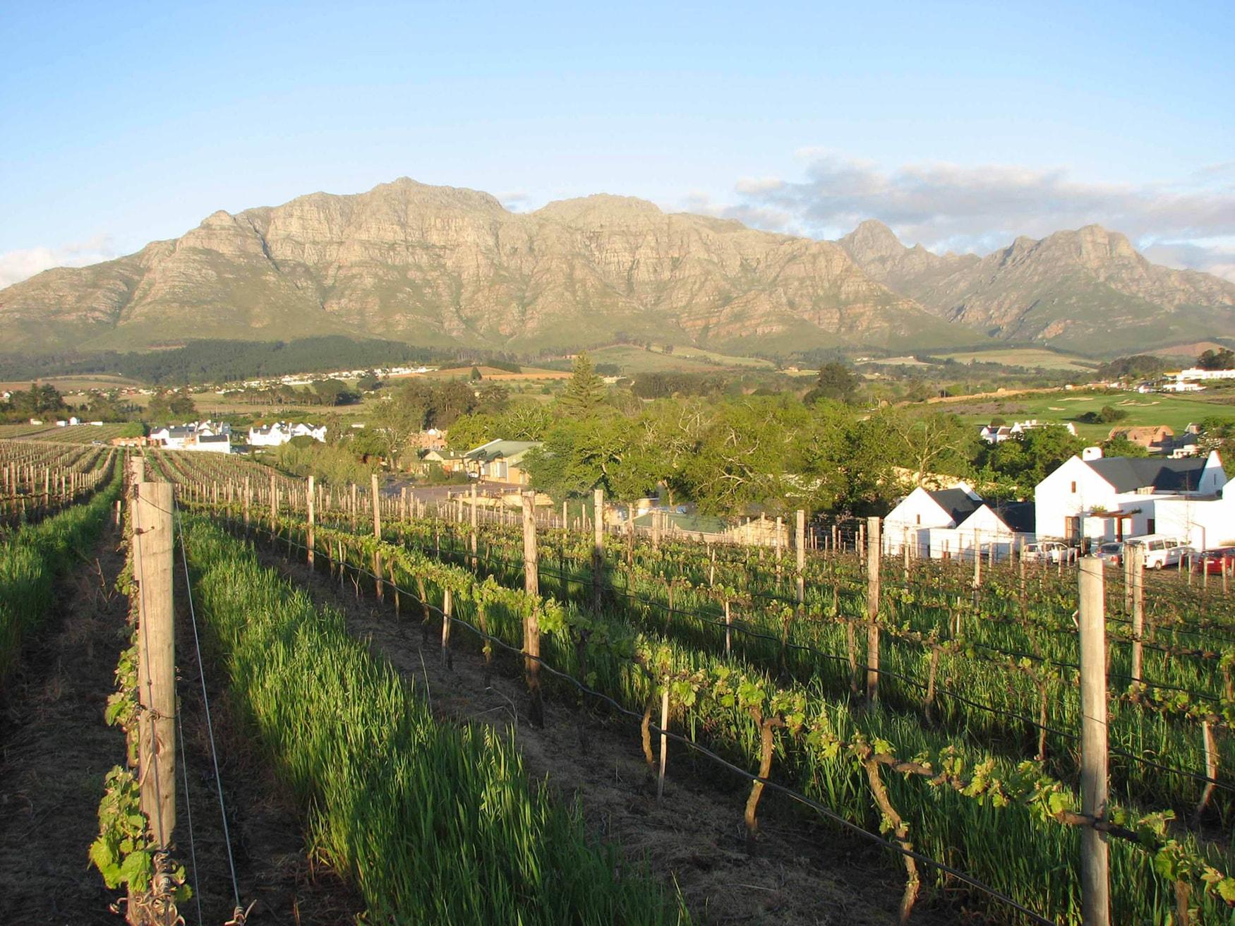 Kleine Zalze - Vineyards (High Res)-min