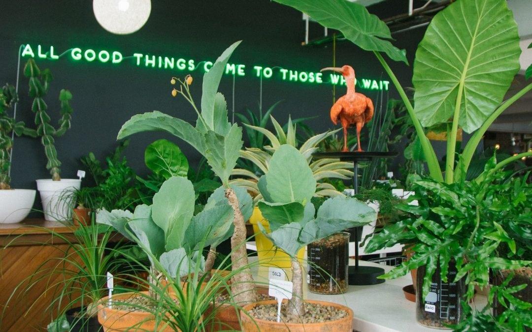 Saint Verde Botanicals in Durban
