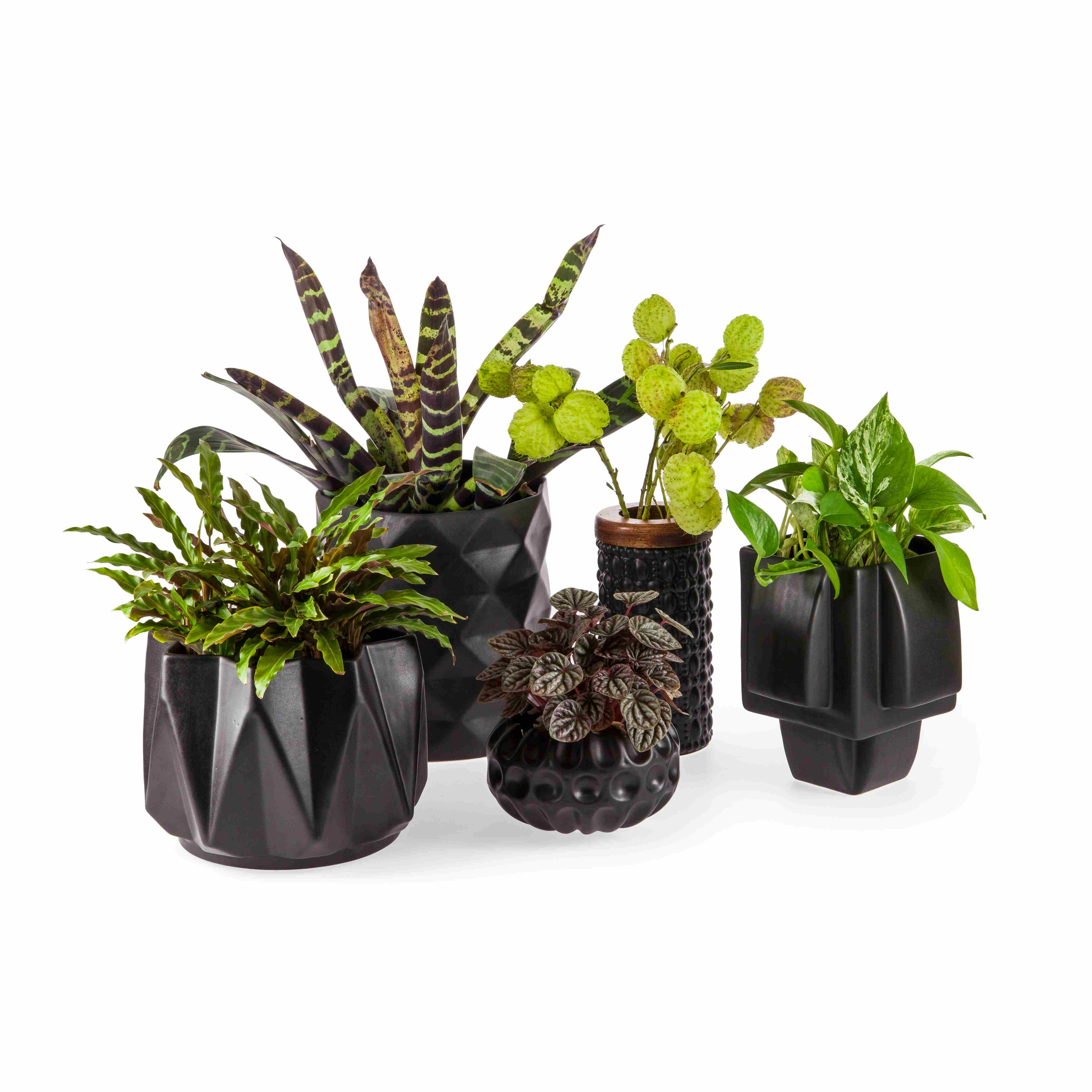 Rialheim selection of Matte Black Vases and planters-compressed