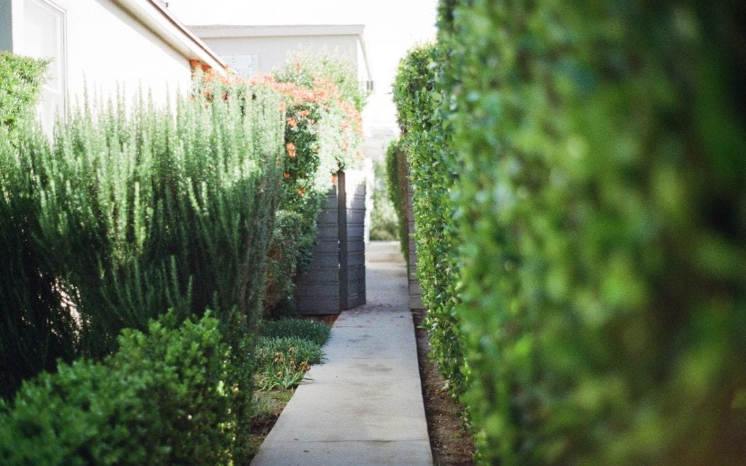 Mapitsi Holdings: Landscaping in JHB