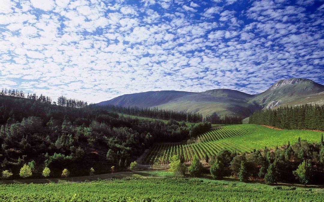 Paul Cluver Wines in Elgin