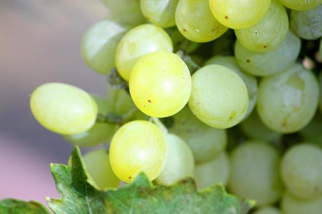 grapes-707590_640