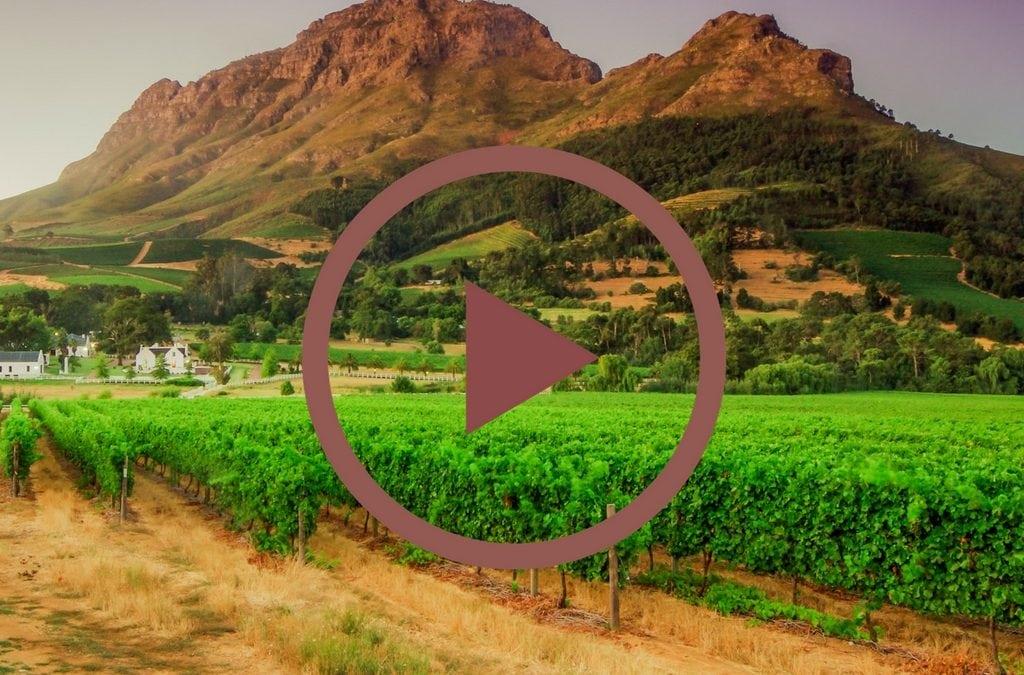 Winelands: Video