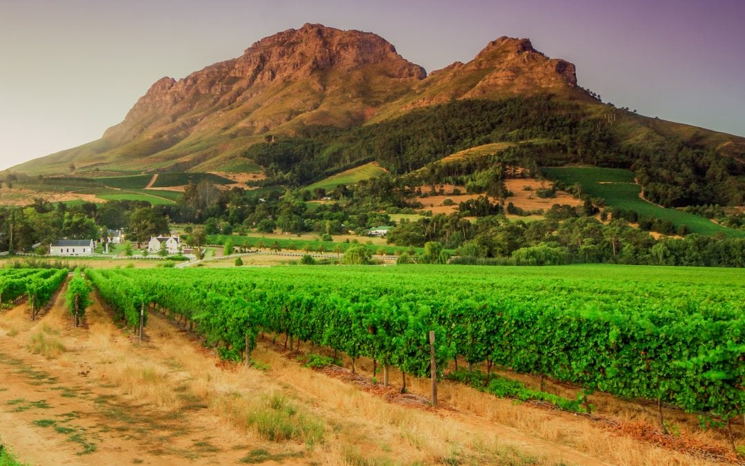 Winelands: Most Popular Suburbs for Under 30's