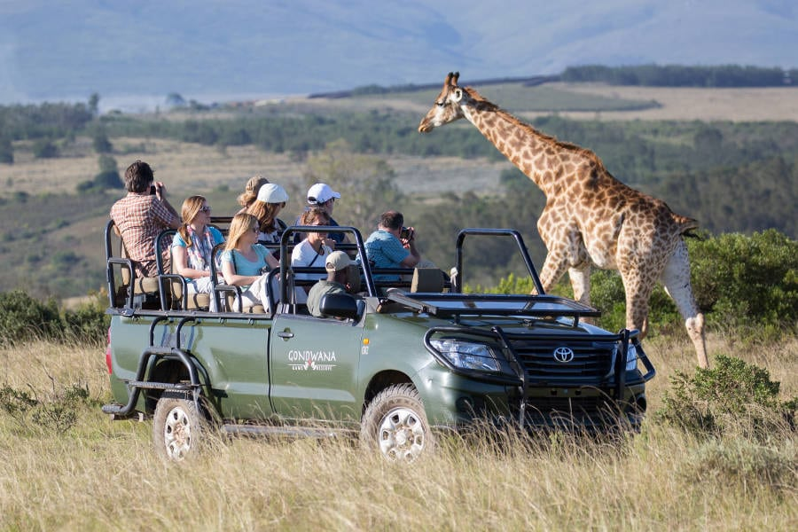 Suburb Focus: Game Reserves in the Western Cape