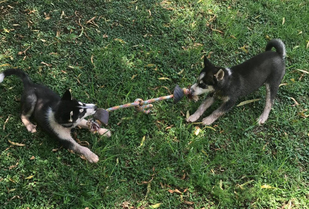 Doggy Active
