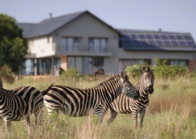Wildlife at The Hills Game Reserve