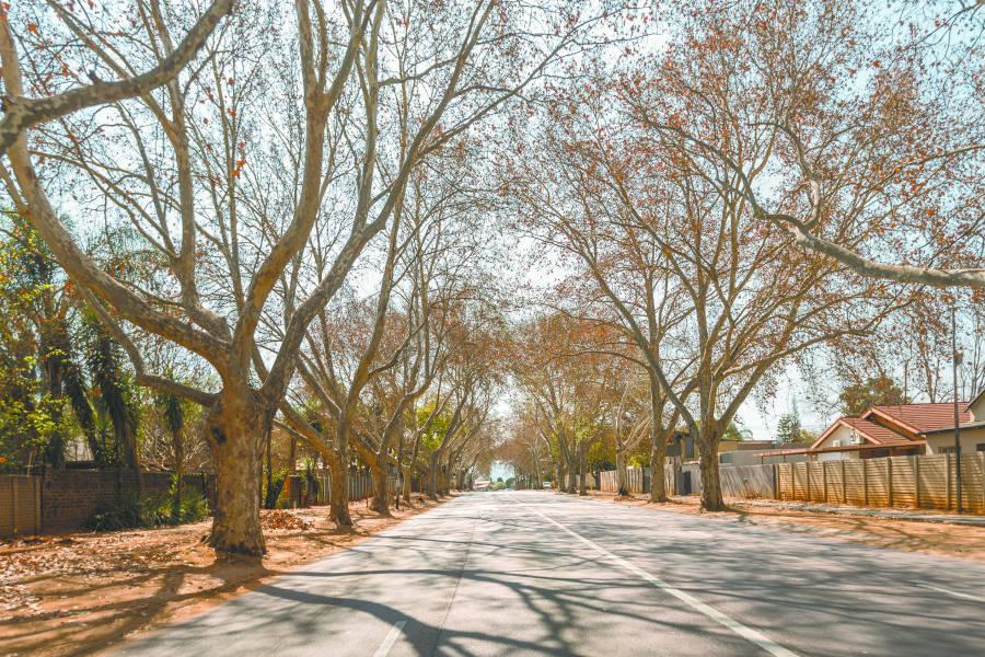 Suburb focus: Rietondale & Riviera