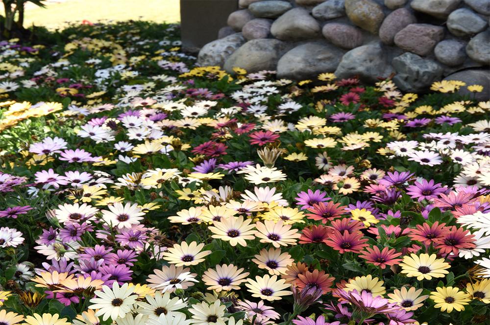 JHB: Let your spring garden blossom