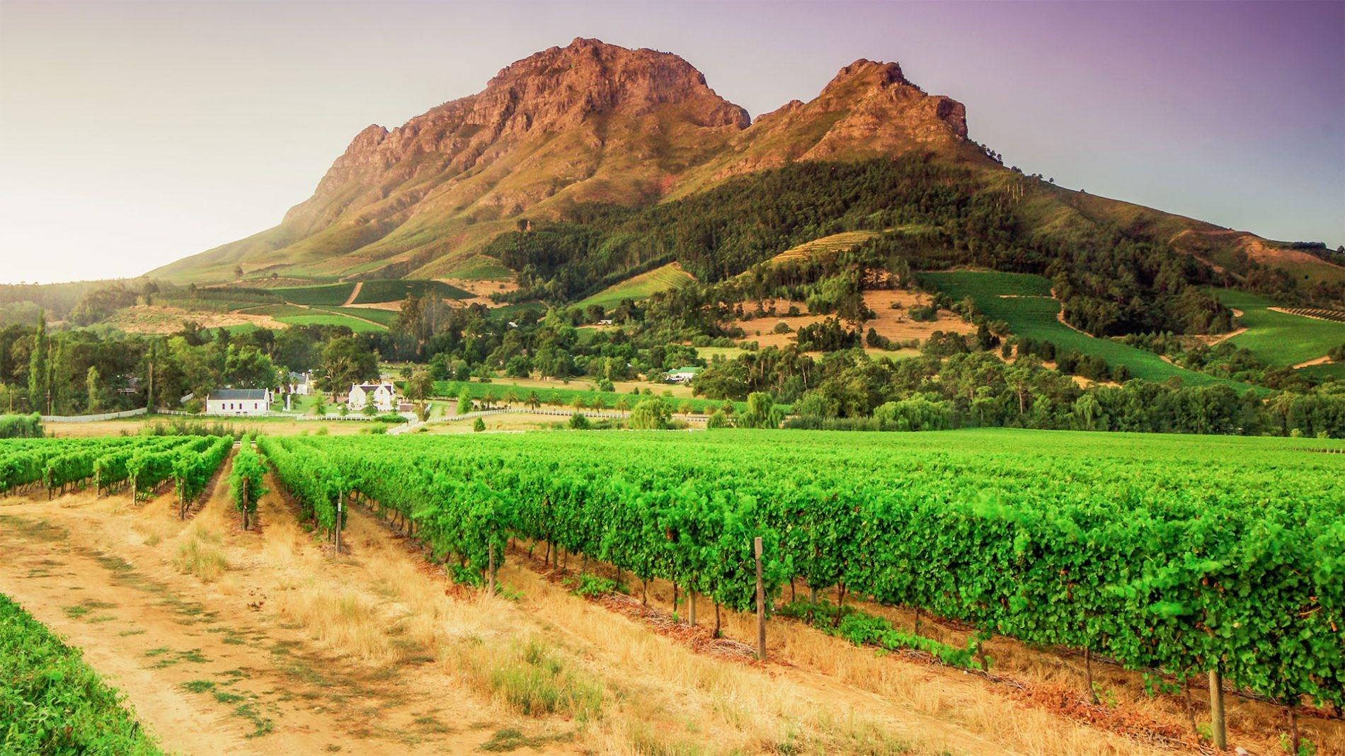 Winelands living