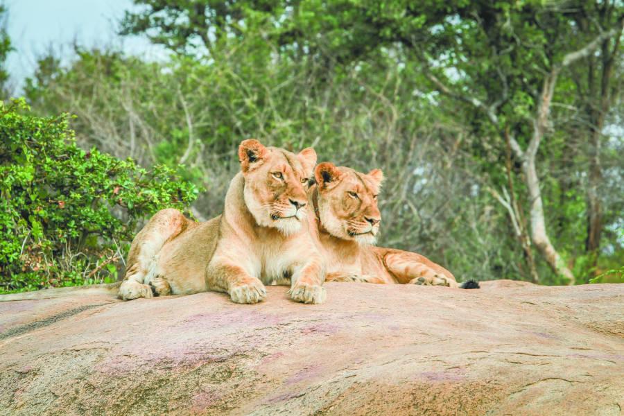 Sofa safaris